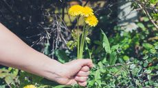 How to Kill Weeds: Natural, Nontoxic Ways to Win the War This Summer