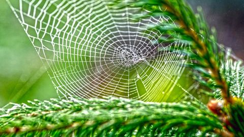 How To Keep Bugs From Hitching a Ride Into Your Home via Your Christmas Tree