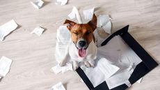 11 Mortifying Home Buyer Behaviors That Make Real Estate Agents Cringe