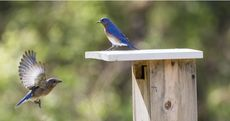 The Homeowner's Guide to Backyard Bird-Watching