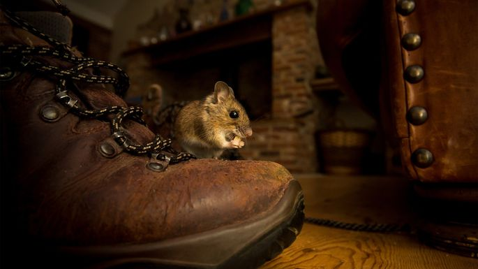 mouse-on-boot