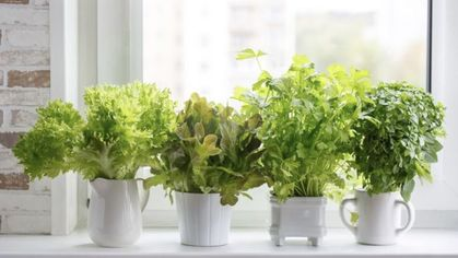 Your Guide for Growing Vegetables Indoors So You Never Have to Hit Up a Farmers Market Again