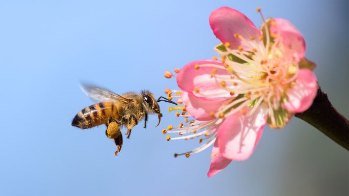 bee-pollinating