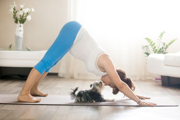 Charming Pregnant Woman And Puppy Practicing Dog Yoga Pose At Home Good Looking