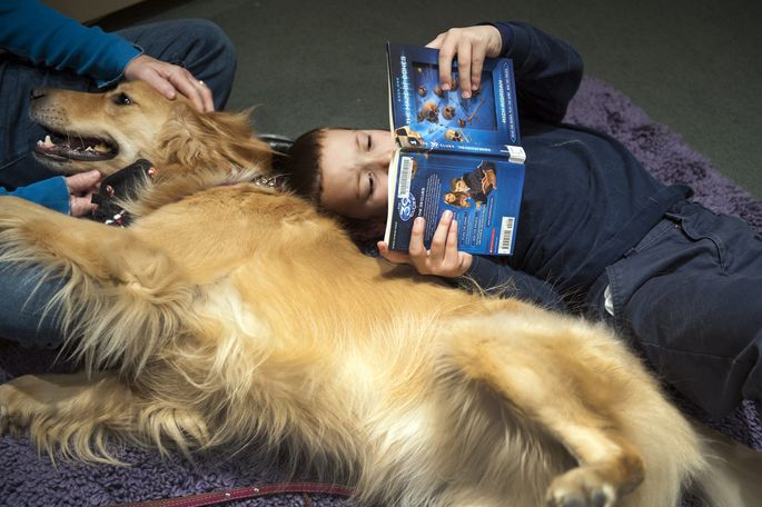 An 8-year-old practices reading a book to a golden retriever in a program called Paws to Read in Alexandria.