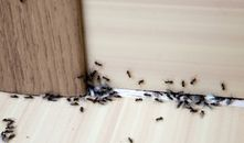 Summer Ant Sightings Could Spell Trouble—How To Stave Off an Infestation