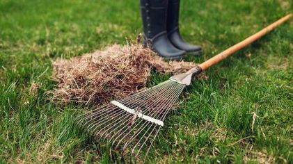 Your Spring Landscaping Plan: 5 Essential Projects Anyone Can Tackle