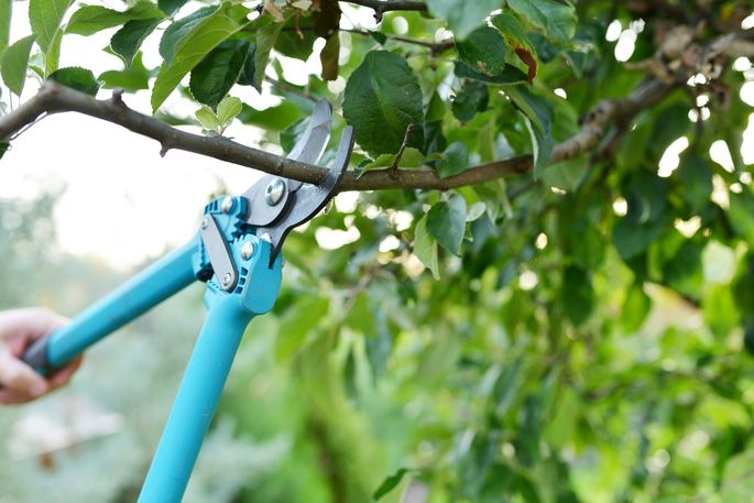 Late winter is an ideal time to prune your trees.