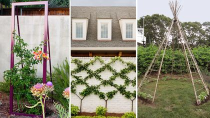 7 Trellis Ideas Every Green Thumb Should Consider for the Garden