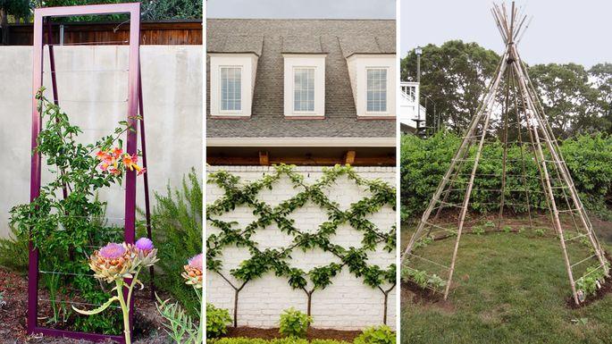 7 Trellis Ideas Every Green Thumb Will Appreciate   realtor.com®