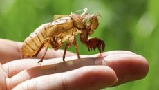 Cicadas Return! What These Creepy Critters Mean for Your Home, Your Yard, and You