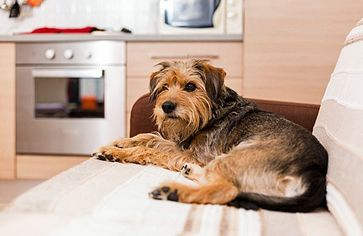 Should You Pay Pet Rent?