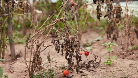 5 Mistakes To Avoid With Your Quarantine Garden Before the First Fall Frost