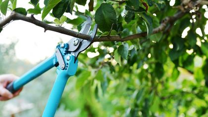 How to Prune Trees: Read This Now, Before You Ruin Your Yard and Your Life