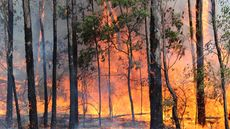 Exploding Trees? 5 Shockers That Can Make a House Catch Fire