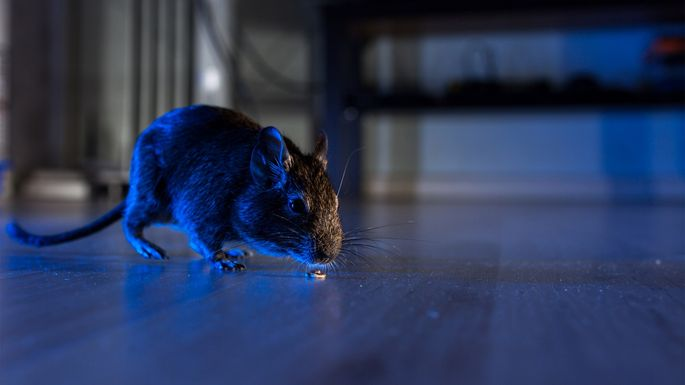 6 Things You Didn't Know Are Attracting Rats to Your Home