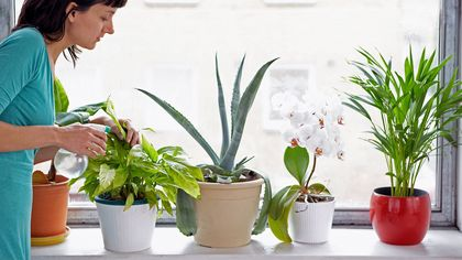 How to Cultivate Indoor Plants in the Concrete Jungle