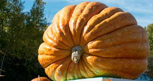 How To Grow a Thousand-Pound Pumpkin: Secrets of Giant-Vegetable Growers