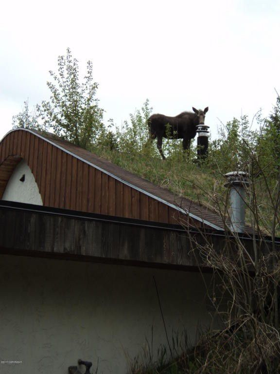 A moose on the roof!