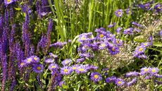 The Secret to Keeping Gardens Beautiful in Sweltering August
