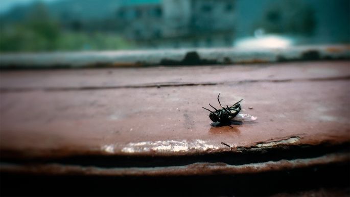 dead-fly-window