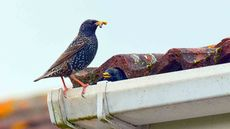 Roosting Risks: The Unexpected Dangers of Bird Nests Near Your Home