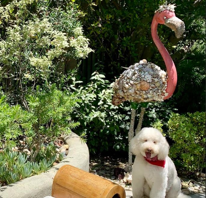 Pink lawn flamingo and a furry friend