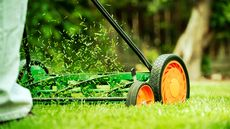 What Is 'Grasscycling'? How Lawn Clippings Can Rejuvenate Your Yard