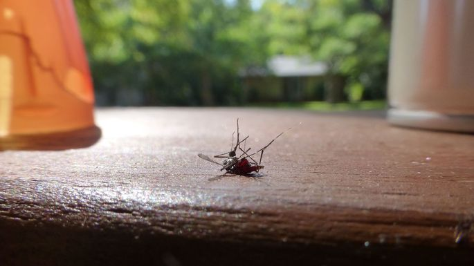 5 Clever Ways to Repel Mosquitoes Without Killing Your Outdoor Vibe