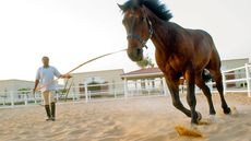 The Best Cities for an Animal Trainer and 10 Other Professionals to Settle Down In