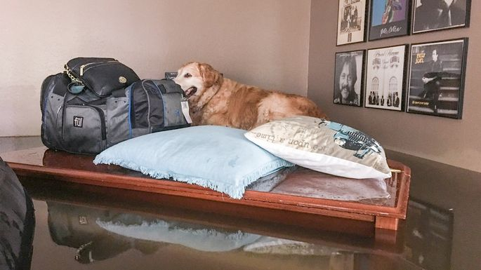 Marc Nathan's home (and dog) during the flood