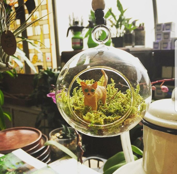 Decorative additions can give personality to your terrarium.