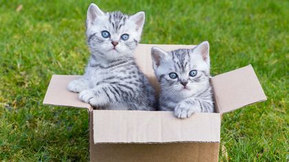 Moving With Pets: The Best Way to Relocate Without Freaking Them Out
