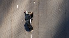 How to Prevent Woodpecker Damage to Save Your Home (and Your Sanity)