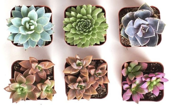 Succulents are small, and a good choice for coffee tables or side tables in living rooms.