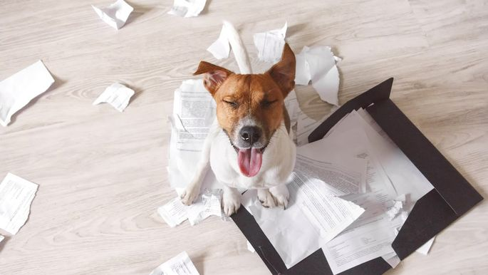 Bad dog sitting on the torn pieces of documents