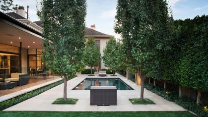 The Best Trees for Privacy, Shade, and More You'll Adore