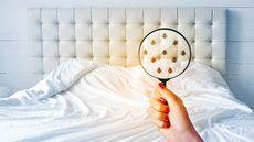 The Bedbug Capital of the U.S.: Do You Live There?