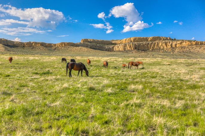 The ranch includes horse corrals.