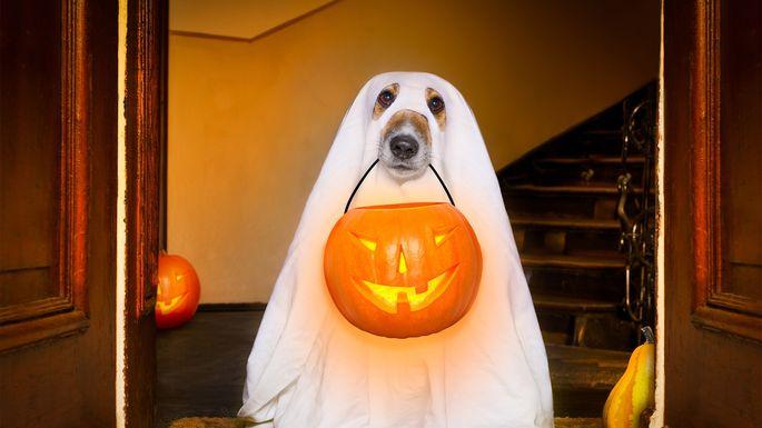 halloween-dog