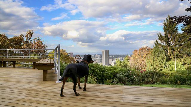 A dog surveys Portland, the fifth-best city for dog lovers.