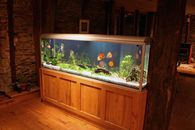 How to Move Your Aquarium and 8 Other Strange Possessions