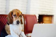 How to Write a Killer Pet Resume (Because Now Landlords Want to See Pet Resumes)