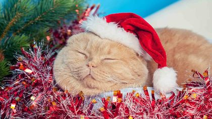 5 Ways the Holidays Could Kill Your House Pets