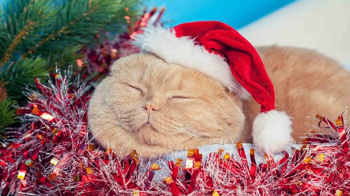 cat-in-red-tinsel-and-hat