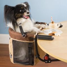 Your Pets Won't Ever Miss You if They Have These Crazy Contraptions