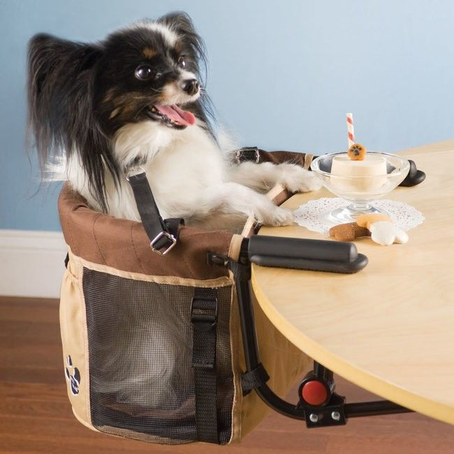 Pet highchair