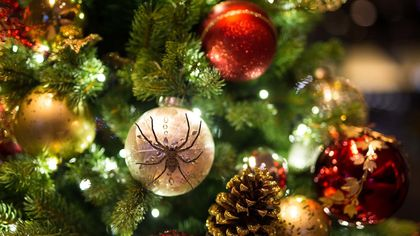 Did Christmas Tree Bugs Hitch a Ride Into Your House?