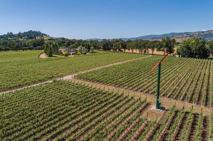 Vineyard on property