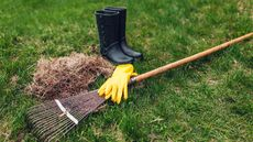What Is Dethatching? The Secret Trick for a Beautiful Lawn
